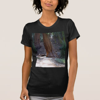 Seqoias Trees Trails T-Shirt