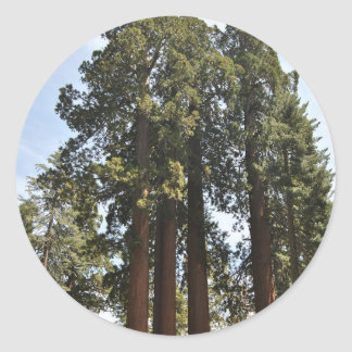 Sequioa National Park Classic Round Sticker