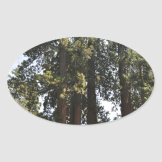 Sequioa National Park Oval Sticker