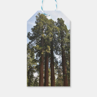 Sequioa National Park Pack Of Gift Tags