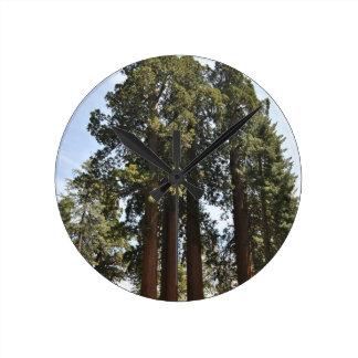 Sequioa National Park Round Clock