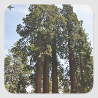 Sequioa National Park Square Sticker