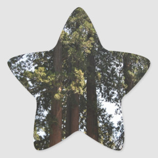 Sequioa National Park Star Sticker