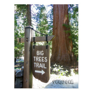 Sequoia Big Trees Trail Postcard! Postcard