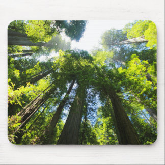 Sequoia Forest Mouse Pad