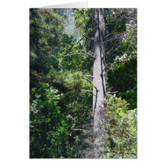 Sequoia Forests Card
