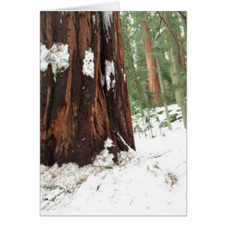 Sequoia in the snow card