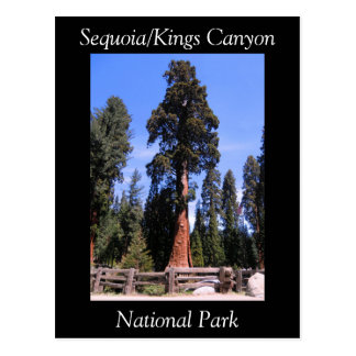 Sequoia Kings Canyon National Park Postcard