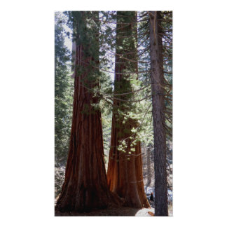 Sequoia/Kings Canyon Poster