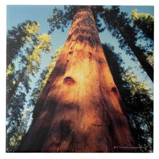 Sequoia National Park , California 3 Tile