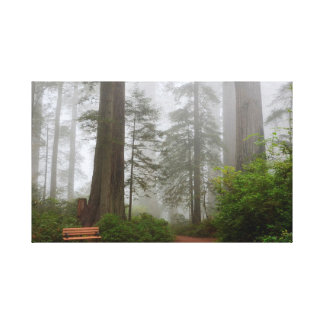 Sequoia National Park Fog Canvas Print
