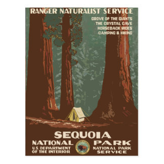 Sequoia National Park Vintage Travel Poster Postcard