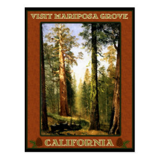 Sequoia Trees at Mariposa Grove Postcard
