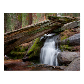 Sequoia Waterfall Postcard