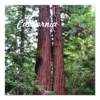 Sequoias Card