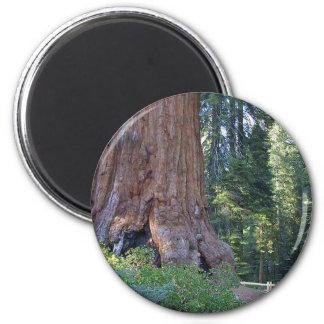 Sequoias Forrests Bark Fences Magnet
