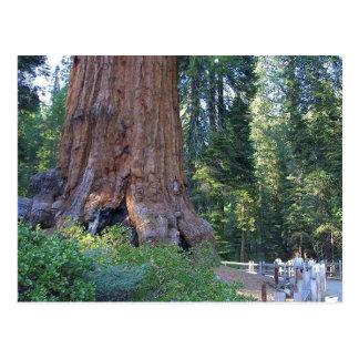 Sequoias Forrests Bark Fences Postcard
