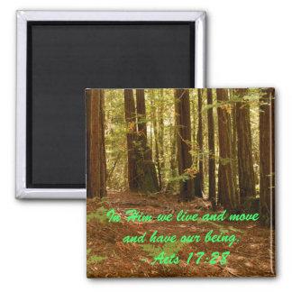 Sequoias Magnet