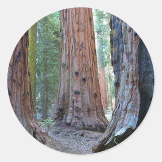 Sequoias Tree Forests Round Sticker