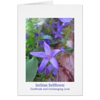 Serbian Bellflower: Gratitude & Unchanging Love Card