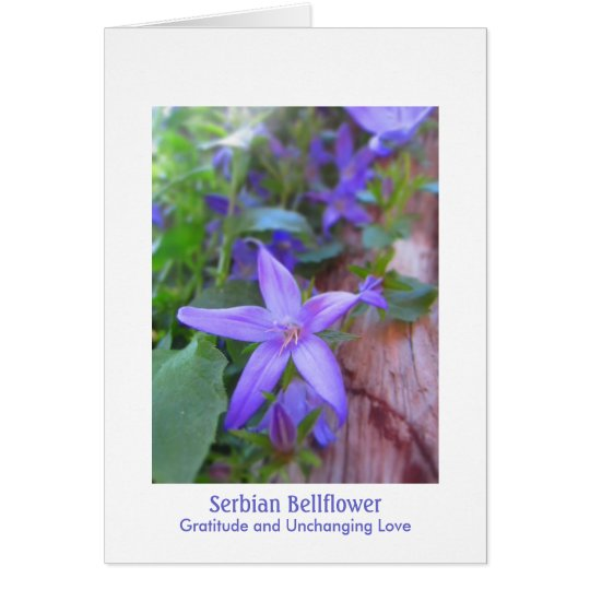 Serbian Bellflower: Gratitude & Unchanging Love Card