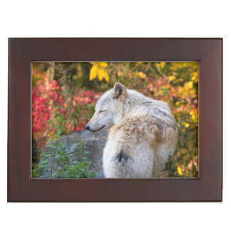 Serene Autumn Wolf Keepsake Boxes