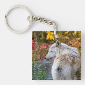 Serene Autumn Wolf Keychain