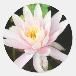 Serene Water Lilly Round Sticker