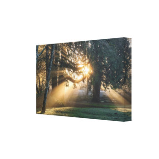 SereneSunrise Through the Trees Canvas Photo Print