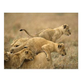 Serengeti National Park, Tanzania 2 Postcard