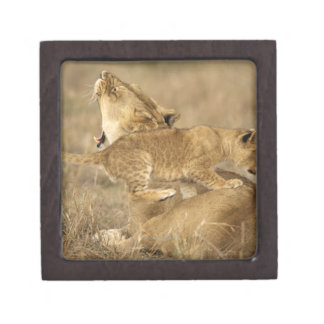 Serengeti National Park, Tanzania Premium Jewelry Box
