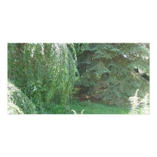 Serenity Customized Photo Card