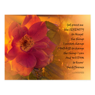 Serenity Prayer Orange Pink Rose Postcard