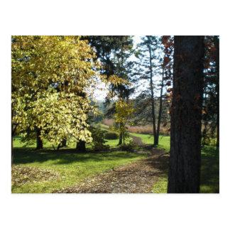 Serenity - Quiet Path Postcard