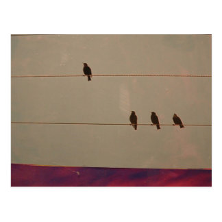 Serenity Series Postcard