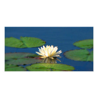 Serenity Water Lily Photo Cards