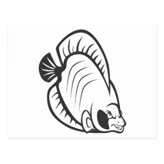 Serious Butterfly Fish in Black and White Postcard