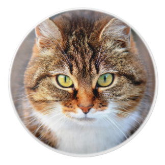 Serious Cat with Green Eyes Photo Ceramic Knob