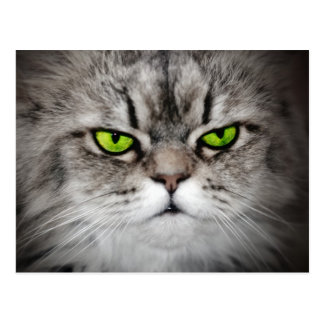 Serious cat with green eyes postcard