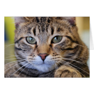 Serious Green-Eyed Tabby Cat Card