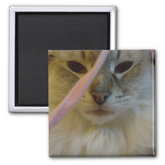 Serious Kitty Square Magnet