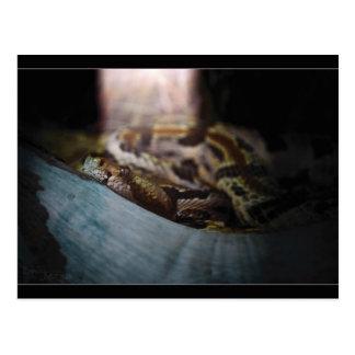 Serpent in Sunlight Postcard