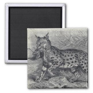 Serval Cat Magnet