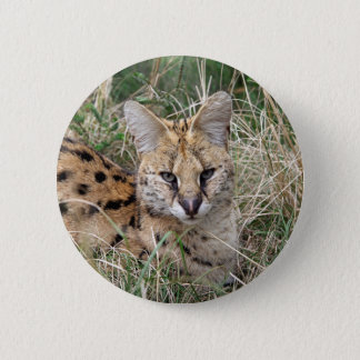Serval cat relaxing in grass 2 inch round button