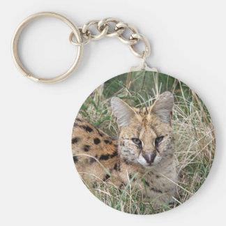 Serval cat relaxing in grass basic round button keychain