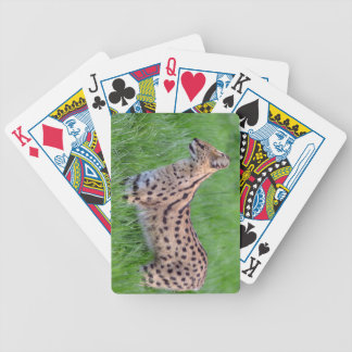 Serval in the grass bicycle playing cards