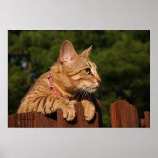 Serval Savannah Kitten USA Canvas Print