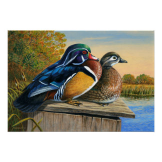 Setting-Up House - Wood Ducks - Poster