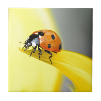Seven Spot Ladybird Takes a Walk on a Sunflower Tile