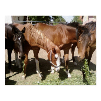 Several Horses Eating Postcard